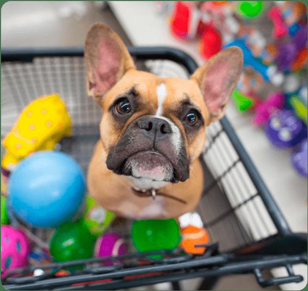 Contabilidade para Pet Shop em São Paulo