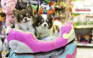 Como Atrair Clientes Para Pet Shop Conheça 4 Práticas - Contabilidade em São Paulo | Decisiva Assessoria e Consultória Contábil